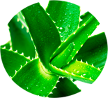 Aloe e vera penigel